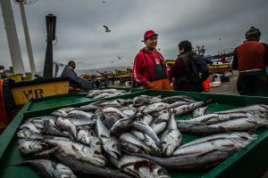VALPARAISO, CHILE - MARCH 17, 2014: Artisanal fisherman, José Toro, sells his morning catch on a small table next to his crew's boat at the port in Valparaiso, Chile.  PHOTO: Meridith Kohut for The World Wildlife Fund